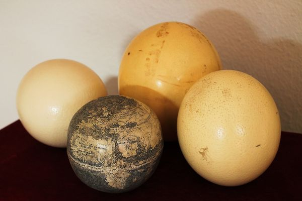 globe-with-other-ostrich-eggs_70552_600x450