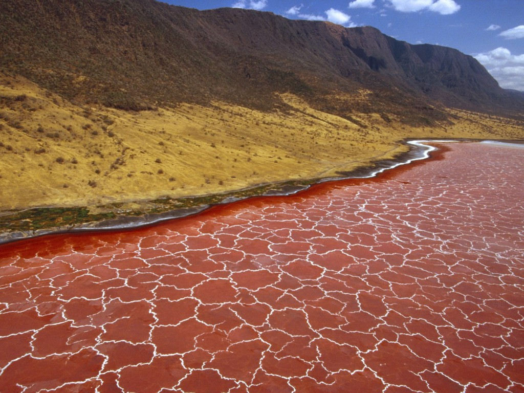soda_formations_on_the_surface_of_lake_natron_tanzania