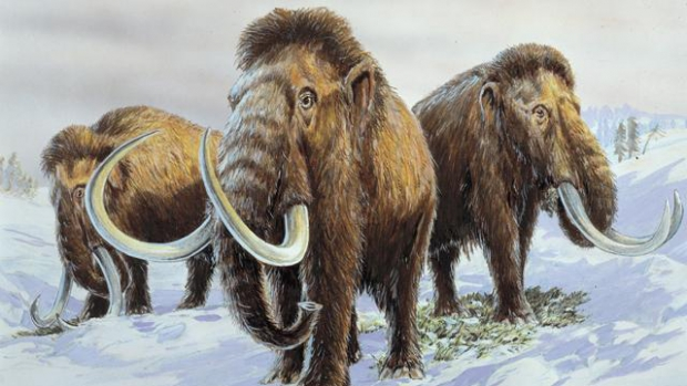 woolly_mammoth_1_81020400